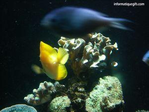 Fond Ecran Poisson Jaune Fond Aquarium Fond Ecran Animaux Vertebres