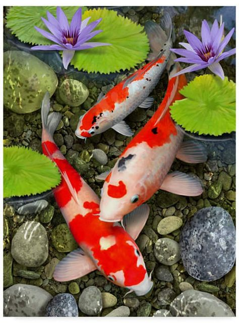 Trademark Global Howard Robinson 'Koi Under Lily Pads' Canvas Art - 24 x 18 x 2