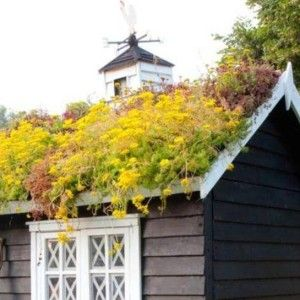 Garden Shed With Yellow Green Roof
