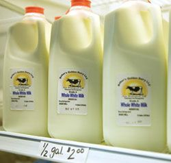 Baker's Golden Dairy. Dairy cows, on-farm milk bottling and store.
