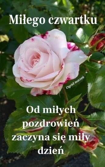 Pin By Jozef On Czwartek Plants Rose Flowers