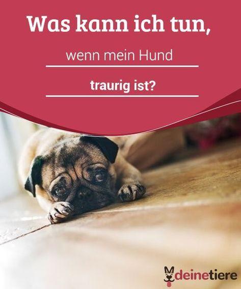 Was Kann Ich Tun Wenn Mein Hund Traurig Ist Mit Bildern Hunde Hundehaltung Hundeverhalten