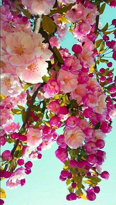 Beautiful - #Beautiful #cherryblossom