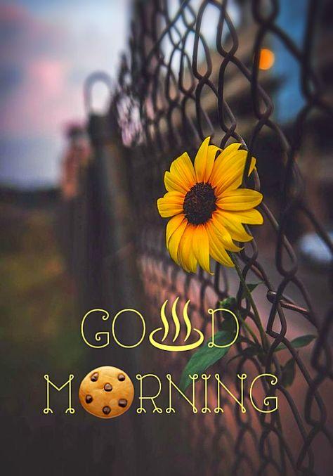- good morning monday | HappyShappy - India's Best Ideas, Products & Horoscopes