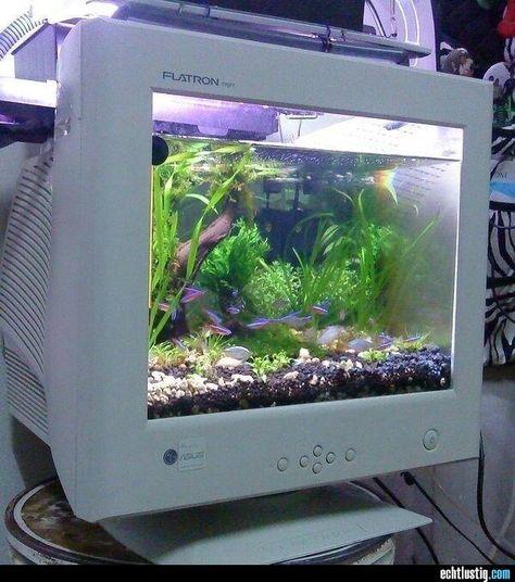 Aquarium In An Old Monitor Inspirierende Bilder Bilder Lilien