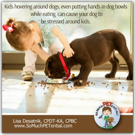 A Dog Bite Prevention Tip For Parents Of Dogs And Kids Actively