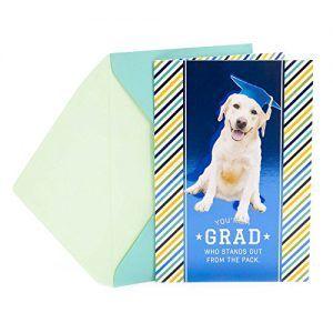 Hallmark Funny Graduation Greeting Card Smiling Dog In Graduation
