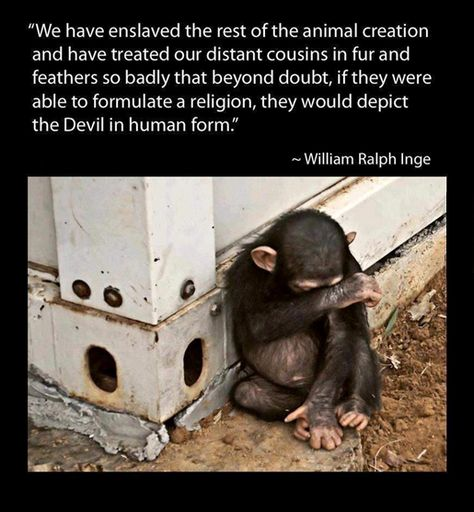 If animals could form a religion, humans would be considered the ...