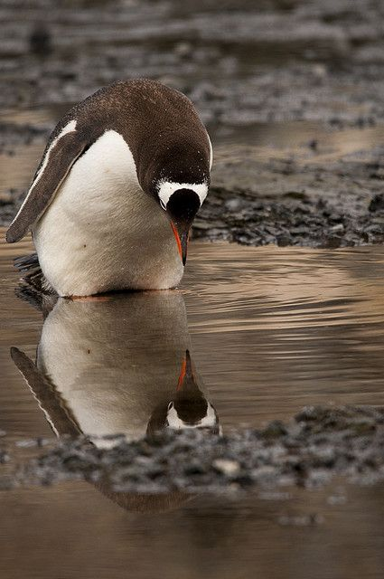 theperfectworldwelcome:      10bullets:          self-reflection by efdixon on Flickr.  Beautiful!