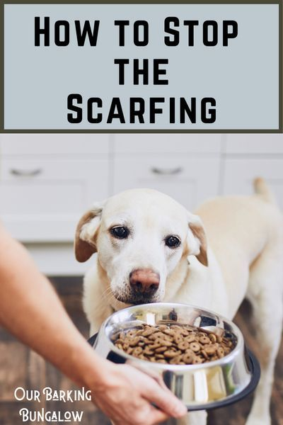 How To Get A Puppy To Slow Down Eating