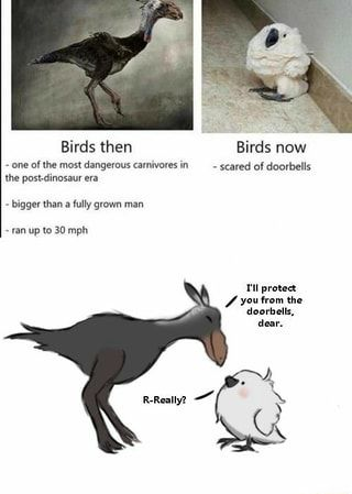 Birds Then Birds Now One Of The Most Dangerous Carnivores In Scared Of Doorbells The Post Dinosaur Era Bigger Than A Fully Grown Man Ran Up To 30 Mph Ifunny