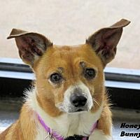 Pin By Vicki Kay On Adopt Me Pets Corgi Pet Adoption