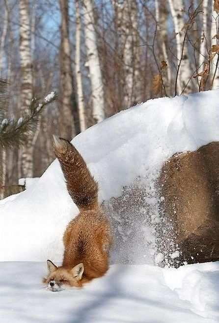 Firefox has crashed.