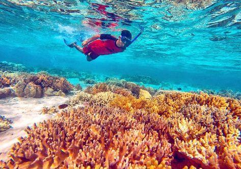 Wisata Pulau Menjangan Dekat Di Bali Mudah Dijangkau Dari