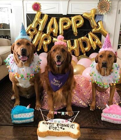 Dog Birthday Ideas Dog Birthday Party Ideas Dog Birthday Photoshoot Ideas Dog Birthd Dog Birthday Party Pets Dog Birthday Pictures Puppy Birthday Parties