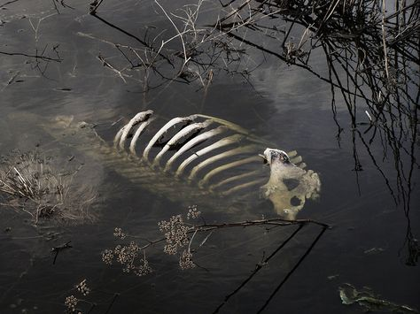 Watery Grave - Jessica Mccord – Watery Grave Once again another shoot took in Potlatch Idaho. Where we were sta - Indra The 100, Deer Skeleton, Culture Art, Southern Gothic, Vulture, Paramore, Dog Walking, Draco Malfoy, Macabre