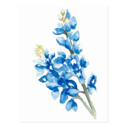 Watercolor Bluebonnets Postcard Zazzle Com Watercolor Flowers