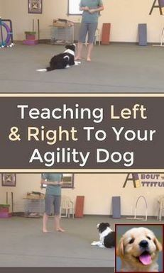 House Training A Puppy Methods And Dog Training Classes Columbus