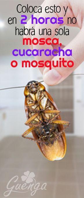 Como Eliminar Cucarachas En Casa Con Trucos Simples Repelente De Insectos Casero Remedios Para Cucarachas Trampas Para Moscas