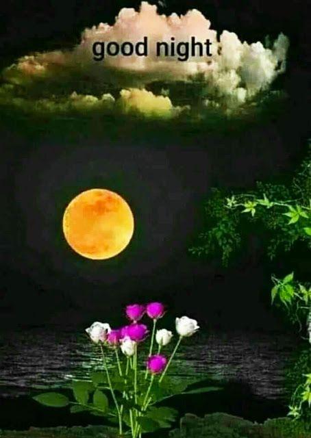 Romantic Good Night Gif For Whatsapp : romantic, night, whatsapp, Night, Images, Whatsapp, Images,, Beautiful, Lovely