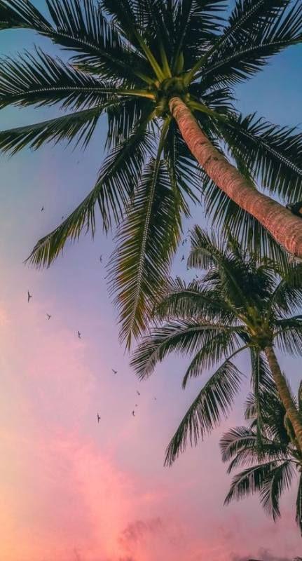 40 Trendy Summer Lock Screen Iphone Wallpapers Palm Trees Screen Fondos De Pantalla Palmeras Ideas De Fondos De Pantalla Fondos De Pantalla De Iphone