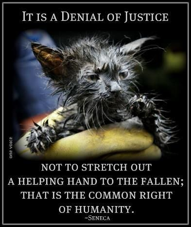 I don't even like cats & this makes me want to cry. It is a denial of justice not to stretch out a helping hand to the fallen; that is the common right of humanity. Beautiful Creatures, Animals Beautiful, Animals And Pets, Cute Animals, Happy Animals, Pitbulls, Stop Animal Cruelty, Feral Cats, All Gods Creatures
