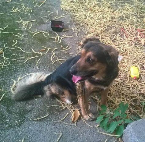 FOUND DOG: 07/27/2017 - Shoreline, Washington, WA, United States. Ref#: F34187 - #CritterAlert #FoundPet #FoundDog