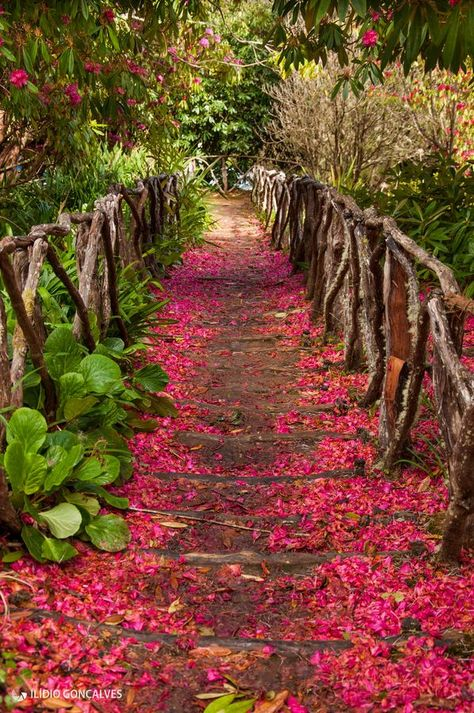 Tuinpad bospaadje met houten planken & hek & bloesembomen Trail in Queimadas, Santana, Madeira Island - Portugal Beautiful World, Beautiful Gardens, Beautiful Places, Foto Nature, Goncalves, Beautiful Landscapes, Wonders Of The World, Mother Nature, Flower Power