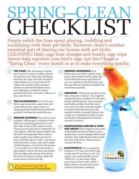 Spring Clean Checklist Cockatiel Care Conure Parrots Parakeet Care