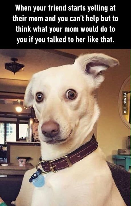 Me As A Kid Funny Dog Memes Funny Memes Comebacks Dog Quotes Funny