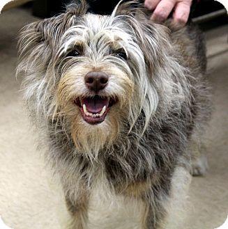 Pin Auf Adoptable Pets Five O Clock Cuteness