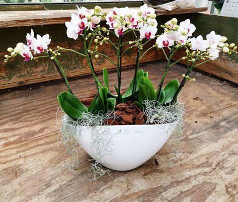 Orchideenschale Fur Unseren Kunden In Der Region Basel Unsere Kundengartnerin Im Bereich Innenbegrunung Stellt Auch Gerne Fur Gartenbau Orchideen Pflanzen