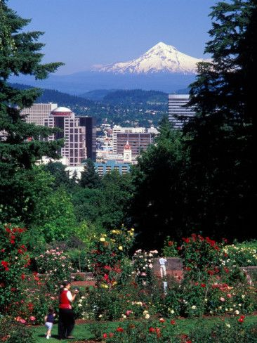 Washington Park Rose Test Gardens in  Portland, Oregon with Mt. Hood off in the distance.