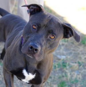 Rocky Rhodes Adoptable Dog Young Male Mixed Breed Dog Adoption