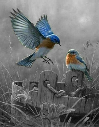 Pin By Ina On Precious Memories Black And White Birds Color Splash Photography Splash Images