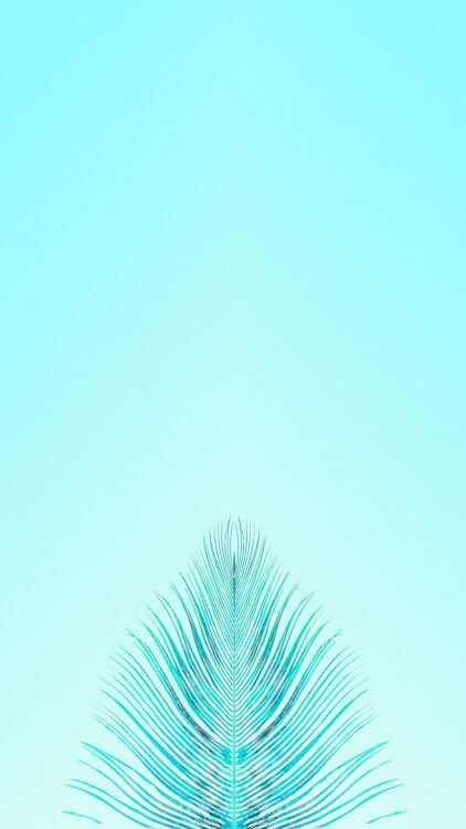 Iphone And Android Wallpapers Blue Feather Background For Iphone And Android Blue Wallpaper Iphone Turquoise Wallpaper Teal Wallpaper