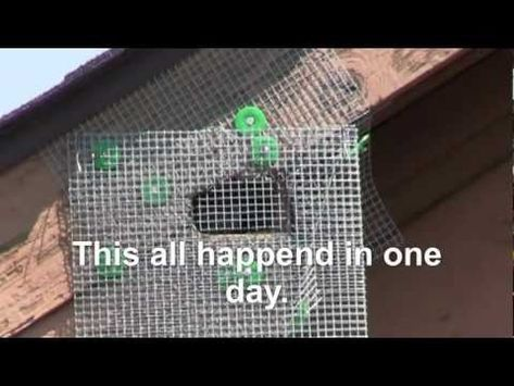 5 Homemade Squirrel Exclusion Device Works Much Better Than 175 One I Bought Energy Efficient Homes Get Rid Of Squirrels Squirrel