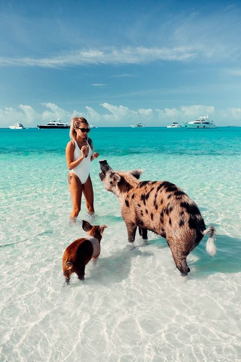The Bahamas is a dream vacation Discover this travel guide itinerary with all the things to do that will take you from Nassau to Exumas pigs and Eleuthera pink sand beach with inspirational pictures Nassau, Eleuthera Bahamas, Vacation Places, Dream Vacations, Vacation Spots, Les Bahamas, Ft Tumblr, Beach Please, Bahamas Vacation