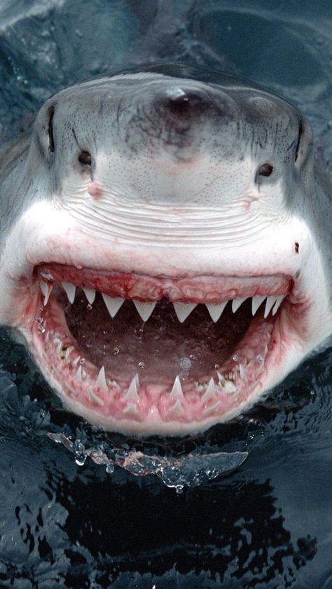 1080x1920 Wallpaper shark, teeth, face, anger