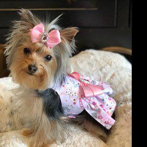 This Item Is Unavailable Etsy Dog Tuxedo Dog Fancy Dress Large Dog Dress