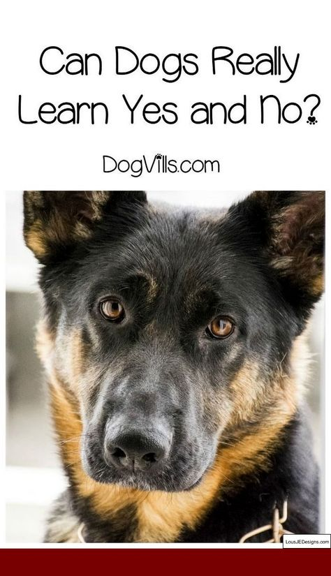 Dog Training Tips On Youtube And Pics Of How To Train Your Dog To