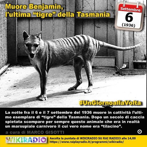 23 Ideas De Tigre De Tasmania Tigre De Tasmania Tasmania Tigre