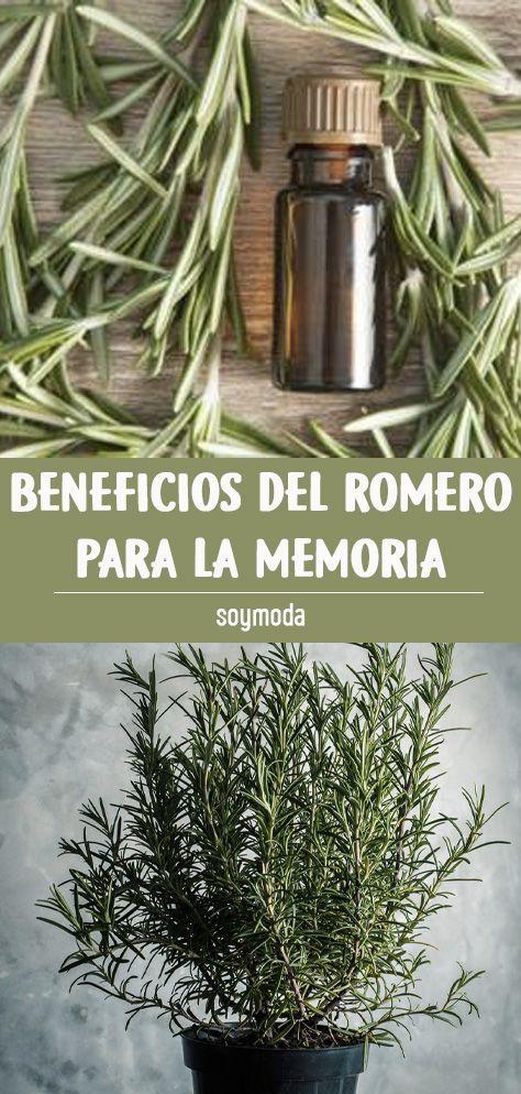 Pin En Beneficios Beneficios Del Romero Hierbas Curativas Remedios Para La Memoria