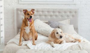 The Best Pet Friendly Hotels And Chains Near Me Pet Friendly Hotels Luxury Pet Pets