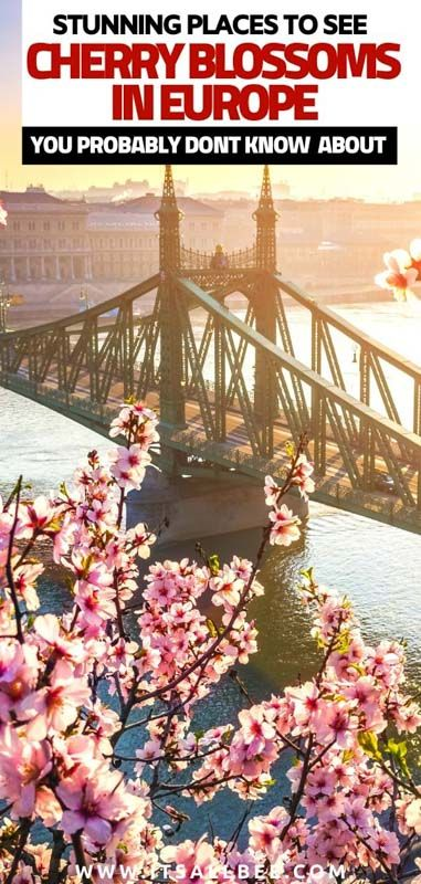10 Beautiful Places To See Cherry Blossoms In Europe That Will Surprise You Itsallbee Solo Travel Adventure Tips Europe Travel Europe Places To See