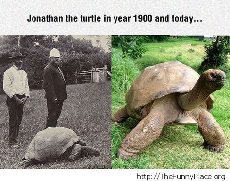 Oldest Turtle Alive Funny Pictures Pinterest Turtle And - Jonathan tortoise mind blowing 182 years old