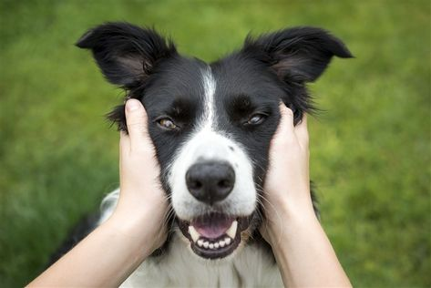 Dogs owners feeling long-term stress can transfer it to