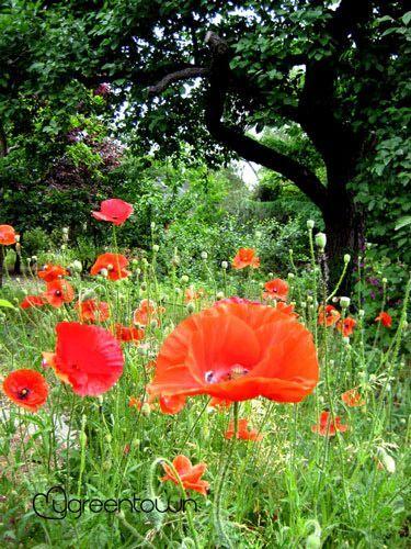 Mygreentown Urban Gardening Berlin Garten Stadtgarten Blog Stadtpflanzen
