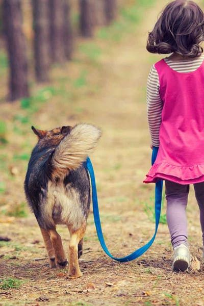 How To Train Your Dog To Protect A Child Aggressive Dog