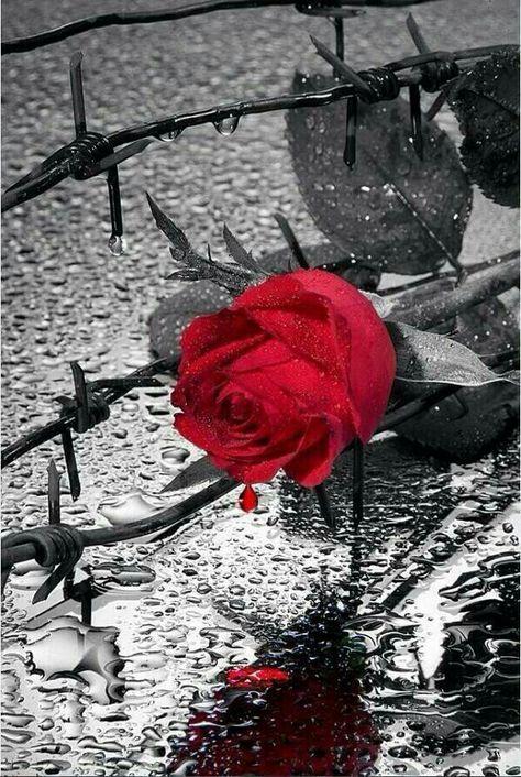 Bonne Journee Fleur Noir Et Blanc éclat De Couleurs Et